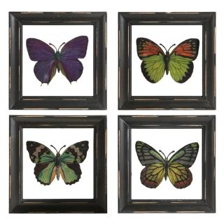 "6"" Butterfly Framed Print"