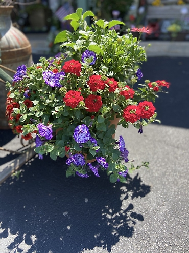 Assorted Blooming Planter