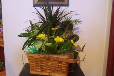 Planter in splitwood basket