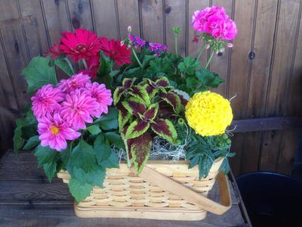 Medium Mixed Plant Basket