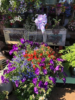 Large Mixed Hanging Basket