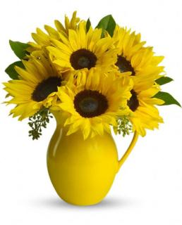 Teleflora\'s Sunny Day Pitcher of Sunflowers
